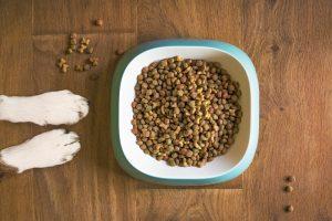 Hĺbka misky pre psov