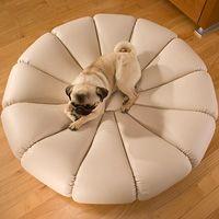 Vankus pre psa rôznych veľkostí